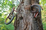 Bike embedded in tree on Vashon Island