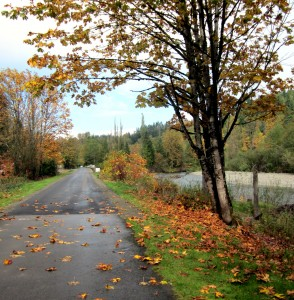 Improved section of Cedar River Trail