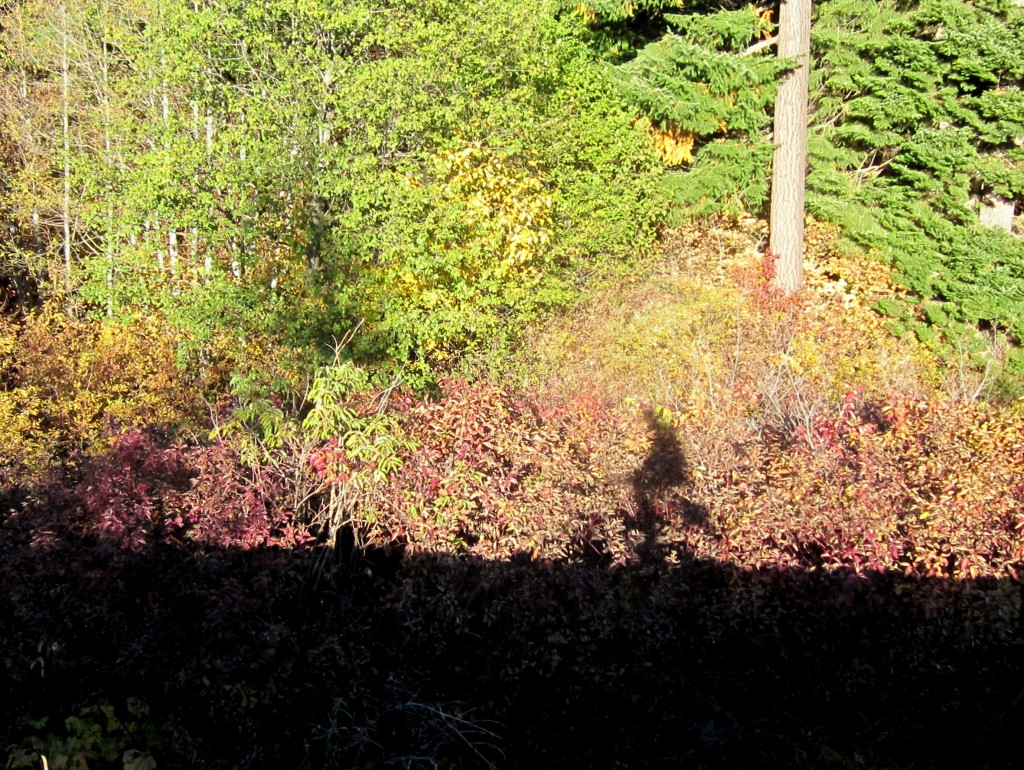 Casting a shadow onto trailside vegetation while riding the old railroad grade.