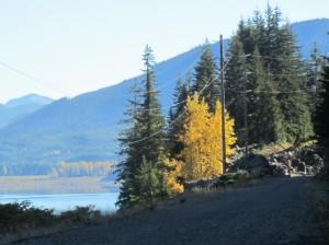 Yellow burst along the rail-trail.