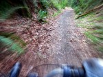 May Creek Trail