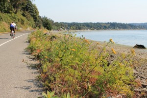 Riding along an inlet on Vashon Island