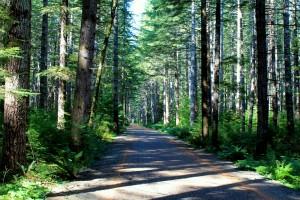 Olympic Discovery Trail near Camp Creek Trailhead