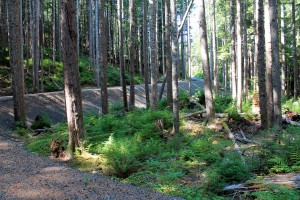 Old railroad grade  on Olympic Discovery Trail near Sol Duc River.