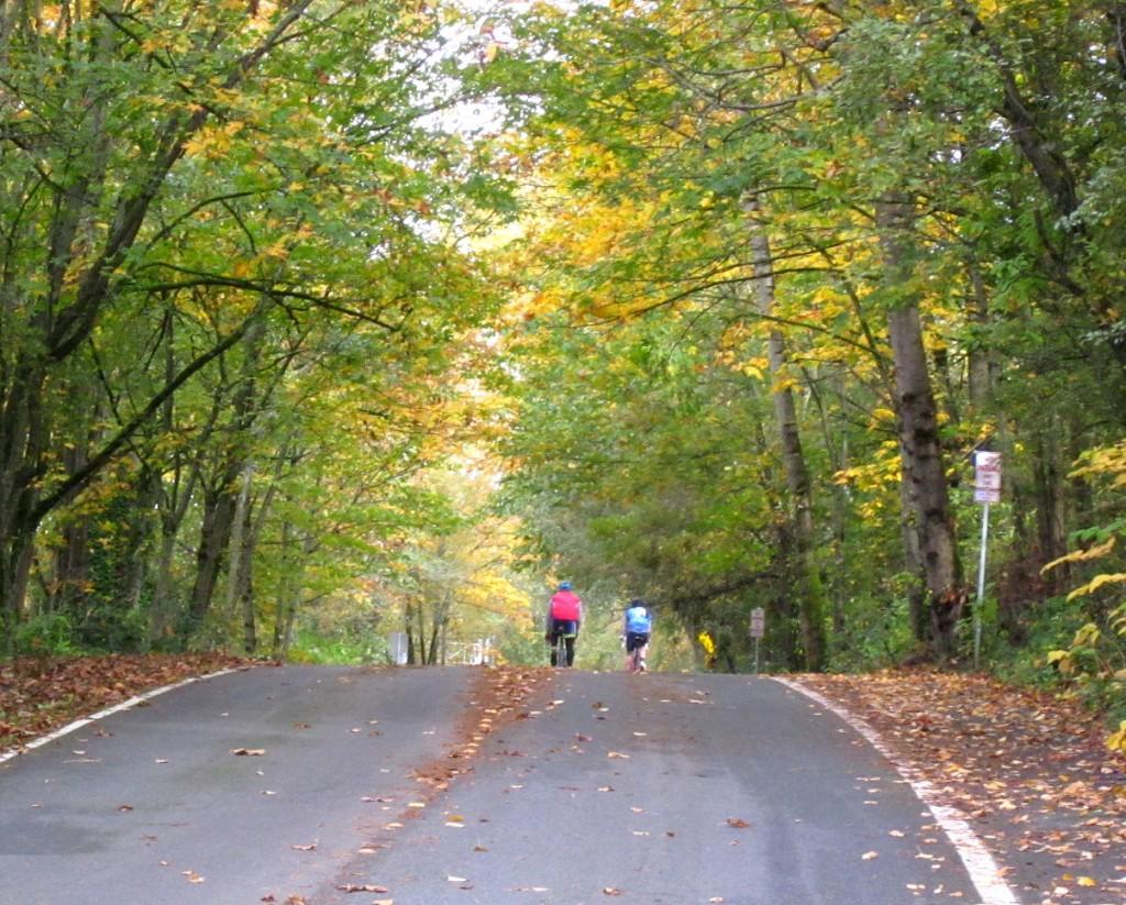 Cyclists on Lake Washington Boulevard