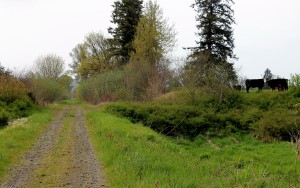 Pastures come to close proximity to Willapa Trail in Pacific County