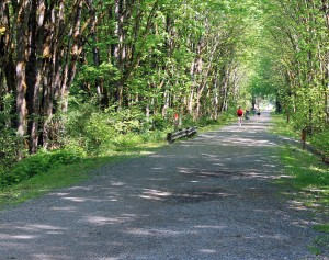 Wooded Snoqualmie Valley Trail  in Carnation