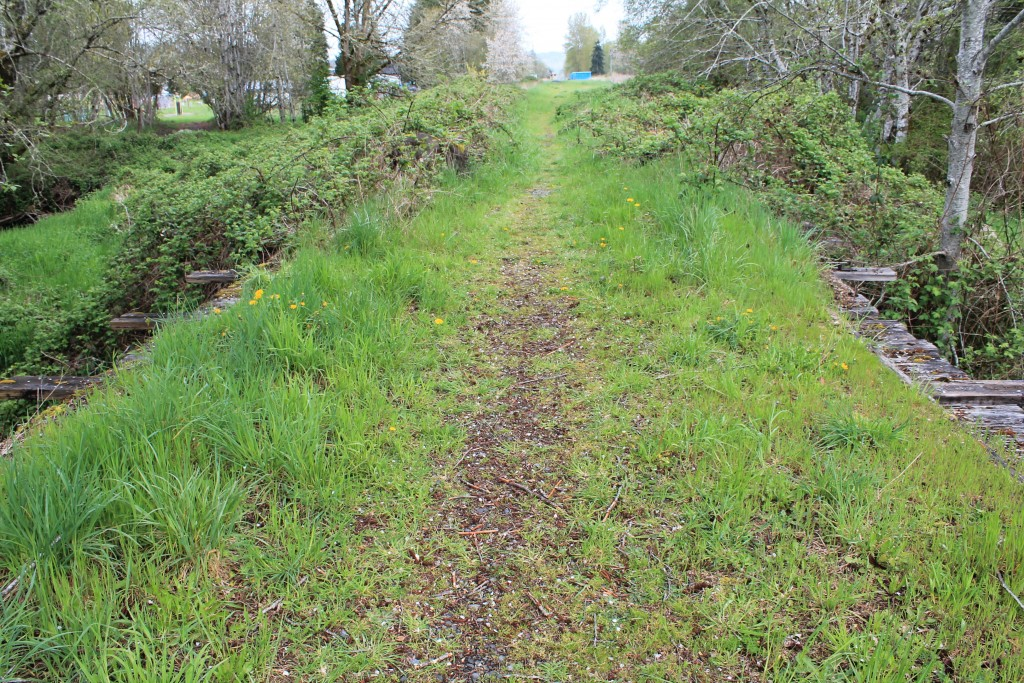 Typical section of Willapa Hills Trail near Pe Ell