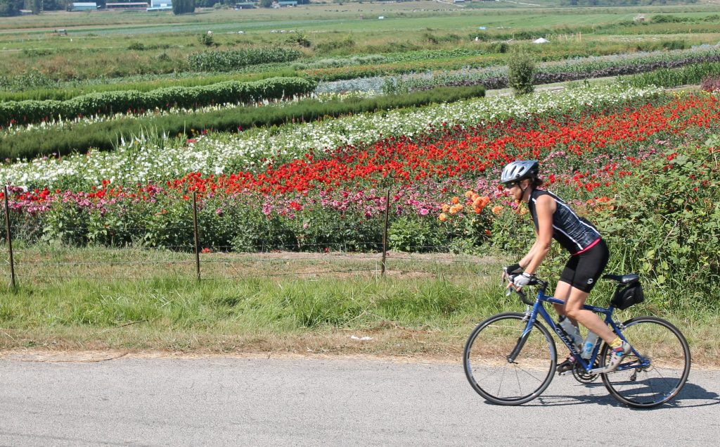 Tour de Peaks passed colorful flower-growing areas